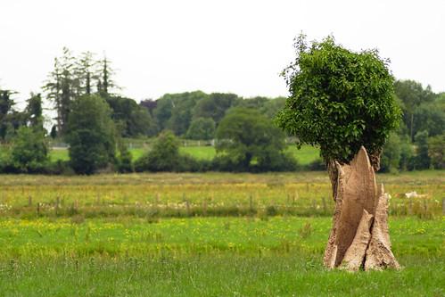 Small Tree in Ballyforan