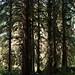 Hoh Rainforest 09-01-2008