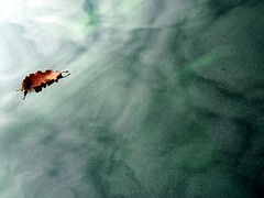 Windermere 22 Sept 08, Algal bloom trip.
