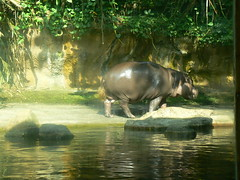The awesome and lovely hippo - part 2.