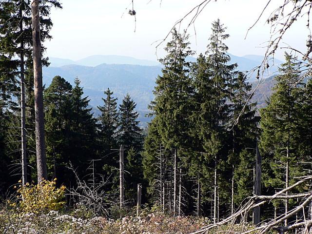 Schwarzwald2