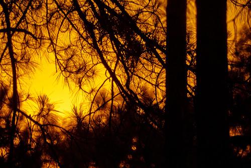trees sunset nature silhouette georgia albany doughertycounty thesussman sonyalphadslra200 project36612011 minoltaafreflex500mmf8