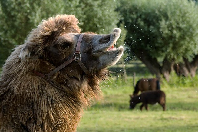 Cute Sneezing Animals Compilation - June 2013 - YouTube
