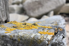 Schottland 2008 - Lossiemouth Beach