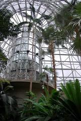 Palms galore