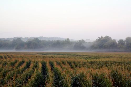 mist field fog nc corn lincolncounty ncpedia