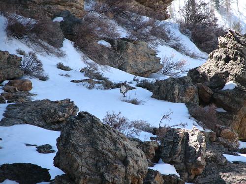 nevada tracks rubymountains lamoille snowcock