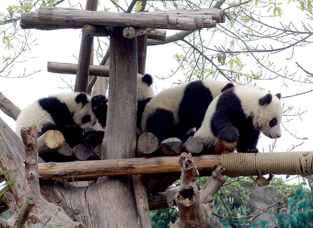 Panda Garden Chinese Restaurant Bloomfield Nm