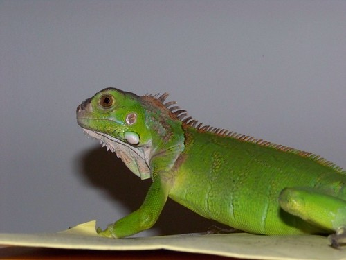Cool Reptiles For Pets