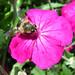 Insecte ©ComputerHotline