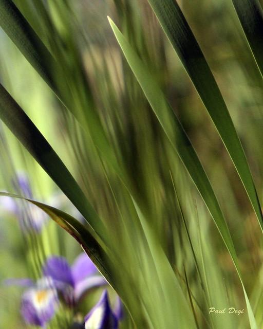just a peek ( of ) purple...
