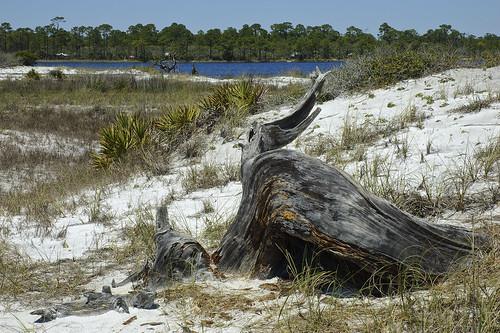 lake florida tranquility deadtree walton graytonbeach highway30a