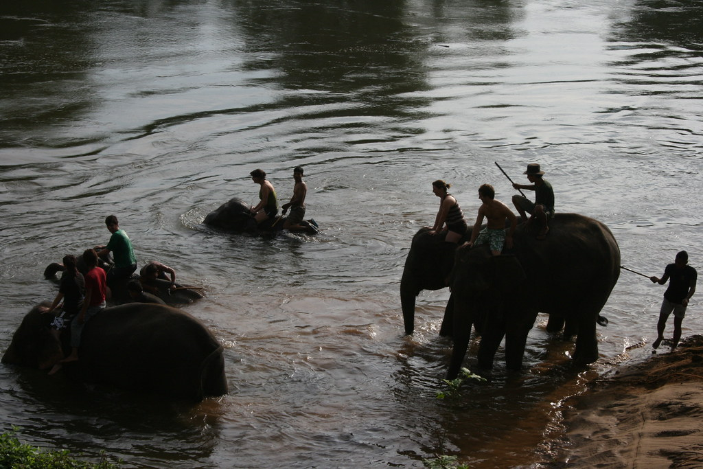 Thailand: Elephant Bath
