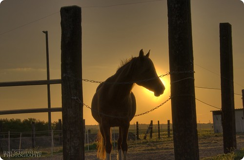|...horse in sunset HDR