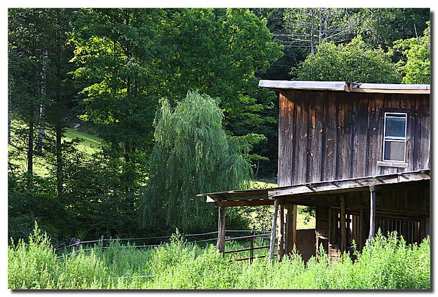 Backyard Barnyard : backyard barn  Flickr  Photo Sharing!