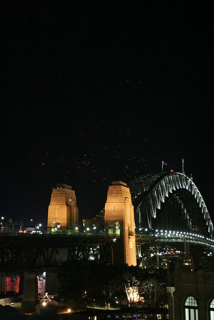 Sydney harbour bridge and bats