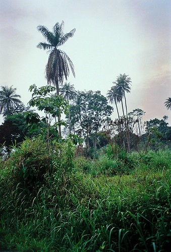 africa ghana westafrica ashanti agogo patriensa asante ashantiregion