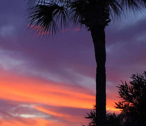 blue sunset red sky color palmtree blueribbonwinner nikond60 diamondclassphotographer theunforgettablepictures theperfectphotographer goldstaraward