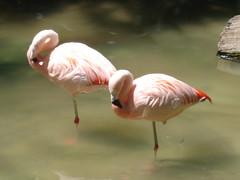 spoonbill(0.0), ibis(0.0), animal(1.0), wing(1.0), fauna(1.0), beak(1.0), flamingo(1.0), bird(1.0), wildlife(1.0),