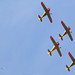 Five Dutch aerobatic flyers