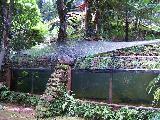 Outdoor fish tank flickr photo sharing for Outdoor fish tank uk