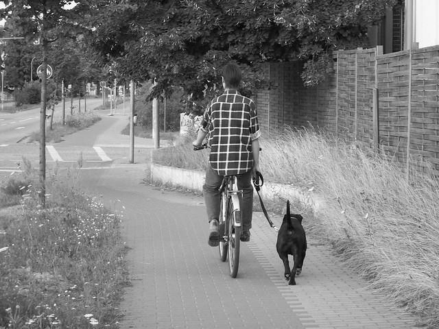 Person riding bike on sidewalk with dog on a leash