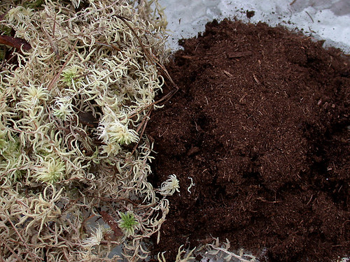 sphagnum moss and peat