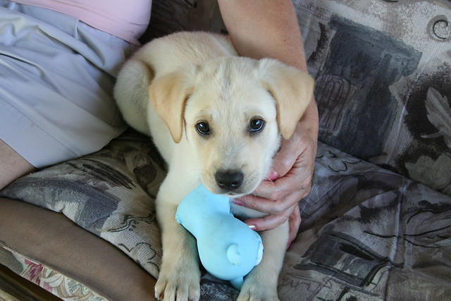 The Cottonelle Puppy! | Flickr - Photo Sharing!