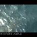 Videos Susu