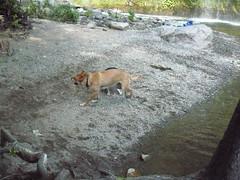 Mossprae Falls 064