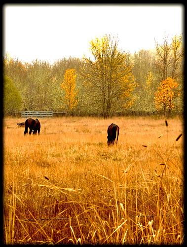 california ranch autumn trees horse orange fall field yellow farm mendocino willits