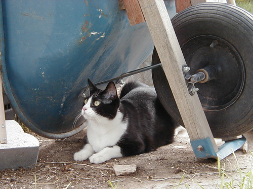wheelbarrow Mack.jpg