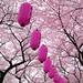 full bloom by ajpscs