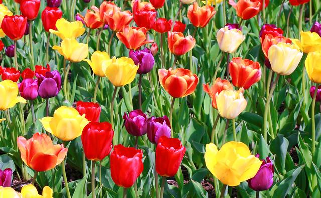 Color and more color, Canon EOS DIGITAL REBEL XTI, Canon EF 28-80mm f/2.8-4L