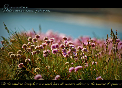 Summertime Pink - Dictionary of Image