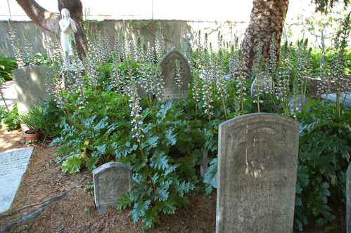 San Francisco Mission Cemetery