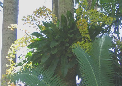yellow cascades & sago palm