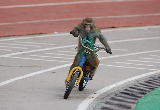 猴子赛车@上海野生动物园