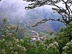 Venezuela Urwald