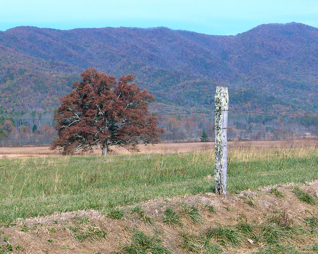 Cade's Cove In Autumn Smoky Mountain National Park