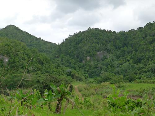 forest jamaica views fields
