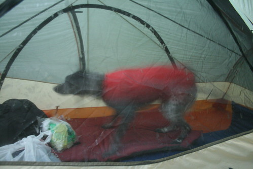 Betty Mountain Girl Getting Comfortable In The Tent