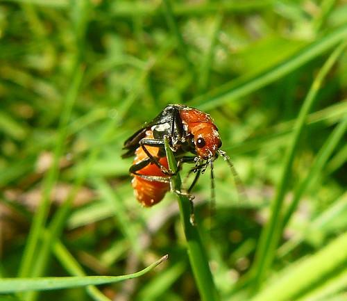 macro insect naturesfinest anawesomeshot buzznbugz