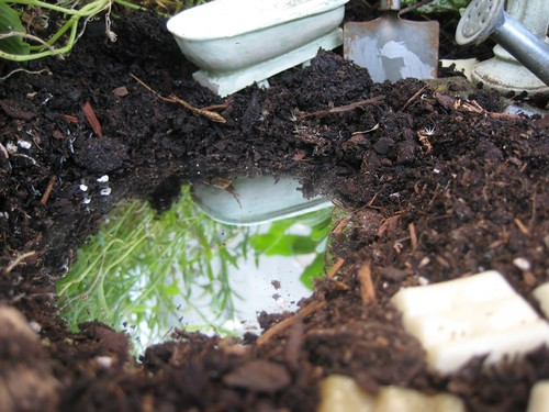 There Is No Place Like Home Fairy Gardens