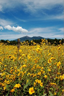 "Flagstaff, Arizona ""The Peaks"""