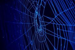 Spider web in dark
