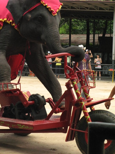 elephant ride a bike