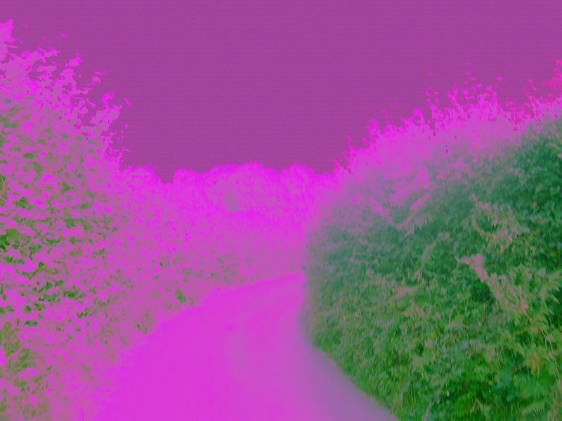 Purple lane In living purpleogreenochrome. Hurst Green to Chiddingstone Causeway