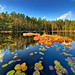 Forest pond (Vertorama) by Rob Orthen