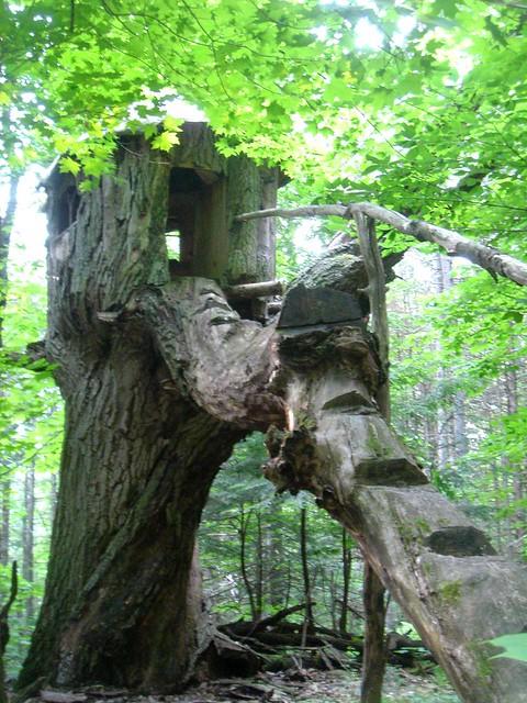 Raven's treehouse, Sony DSC-T11